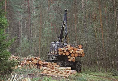 El sector forestal no está en crisis