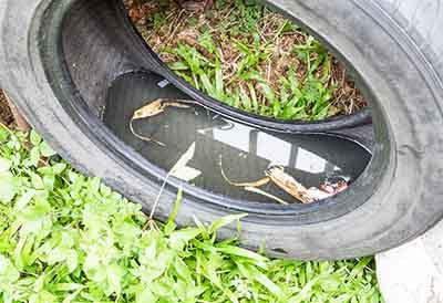 ¿El reciclado de neumáticos evita la proliferación de mosquitos?